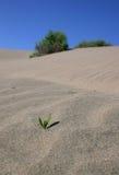 Planta minúscula en el desierto Imagen de archivo libre de regalías