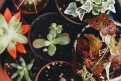 Planta misturada das plantas carnudas no potenciômetro Fotos de Stock Royalty Free