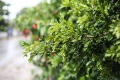 Planta molhada no dia chuvoso Imagem de Stock