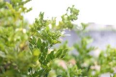 Planta molhada no dia chuvoso Fotografia de Stock
