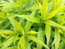 Planta molhada verde da mola com pingos de chuva Fotos de Stock