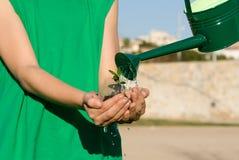 Planta molhando da criança na mão colocada Foto de Stock Royalty Free