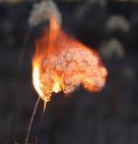 Planta muerta de la quemadura Fotos de archivo
