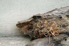 Planta muerta en una corteza seca Fotos de archivo