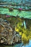 Planta na água Foto de Stock