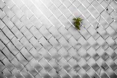 Planta na calha crescente da cor uma cerca Foto de Stock