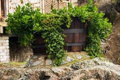 planta na colher de madeira Imagens de Stock