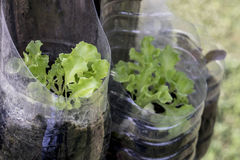 Planta na garrafa plástica fotos de stock royalty free