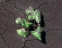 Planta na lama de carvão Imagens de Stock