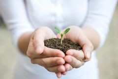 Planta na mão Imagem de Stock