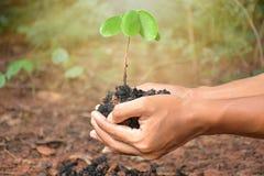 Planta na mão no fundo da natureza Fotografia de Stock