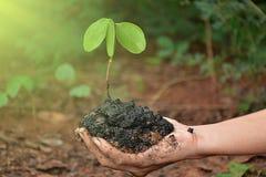 Planta na mão no fundo natural imagens de stock