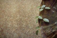 Planta na madeira foto de stock royalty free
