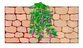Planta na parede Fotografia de Stock