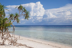 Planta na praia Imagens de Stock Royalty Free