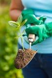 Planta na terra em uma pá pequena imagem de stock royalty free