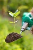 Planta na terra em uma pá pequena fotografia de stock