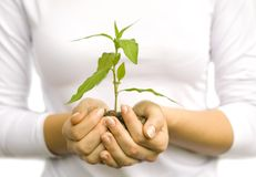 Planta nas mãos Imagens de Stock