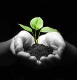 Planta nas mãos Imagem de Stock