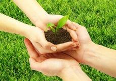 Planta nas mãos Foto de Stock