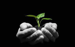 Planta nas mãos Foto de Stock Royalty Free