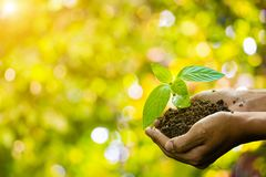 Planta nas mãos Planta levando dos pares novos e plantado imagem de stock
