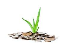 Planta nas moedas Fotografia de Stock