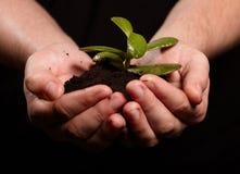 Planta nas mãos Fotos de Stock Royalty Free