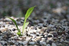 Planta, naturaleza, verde, crecimiento, solo Fotos de archivo