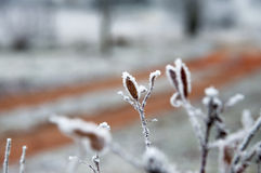 Planta Nevado Fotos de archivo libres de regalías