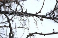Planta nevado no tempo de inverno imagens de stock
