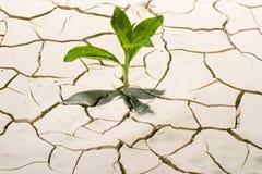 Planta no deserto (2) Fotografia de Stock