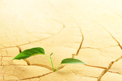 Planta no deserto Foto de Stock Royalty Free