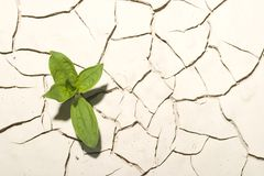 Planta no deserto fotos de stock royalty free