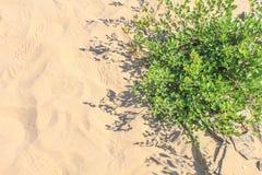 Planta no deserto Imagens de Stock Royalty Free