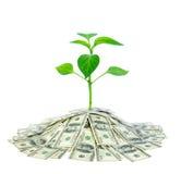 Planta no dinheiro Foto de Stock Royalty Free