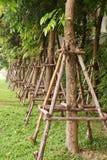 Planta no jardim Imagem de Stock