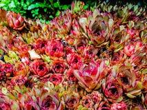 A planta no jardim imagem de stock royalty free