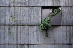 A planta no muro de cimento Imagem de Stock Royalty Free
