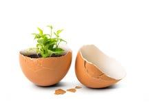 Planta no ovo fotos de stock