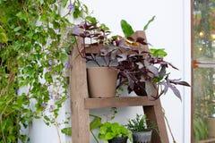 Planta no potenciômetro Fotografia de Stock
