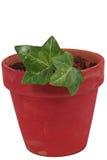 Planta no potenciômetro cerâmico vermelho Fotos de Stock