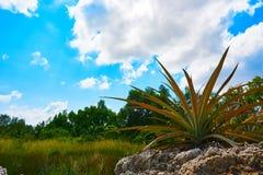 Planta no primeiro plano em Ásia com céu e madeira na paisagem de cambodia do fundo fotos de stock royalty free