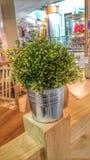 Planta no quarto Fotografia de Stock