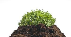 Planta no solo Foto de Stock