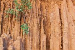 Planta no solo da erosão similar à parede e ao penhasco Imagem de Stock Royalty Free