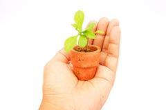 Planta nova à disposicão fotografia de stock royalty free