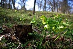 Planta nova Foto de Stock