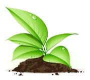 Planta nova Imagem de Stock Royalty Free