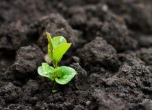 Planta nova Fotografia de Stock Royalty Free